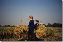 ellis_rice_harvest_jiangsu_1994_10_23