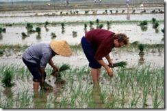 ellis_rice_transplanting_jiangsu_1994_06_10